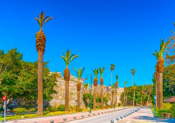 Palmen säumen die Allee unterhalb der Burg Nerátzia
