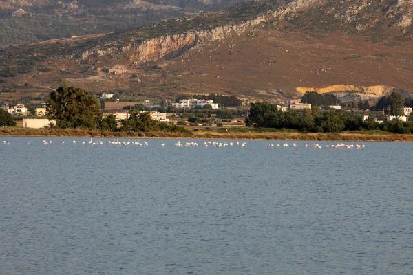 Flamingos im Salzsee Alikes westlich von Tigáki